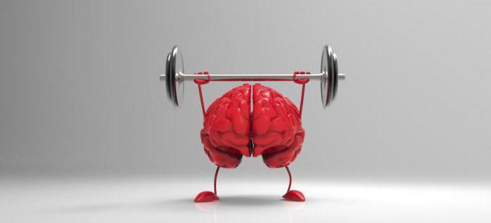 Как запомнить информацию Как тренировать свою память